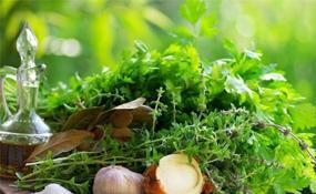 лечение травами фитотерапия